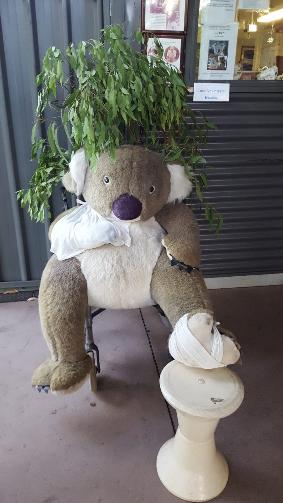 Hôpital des koalas