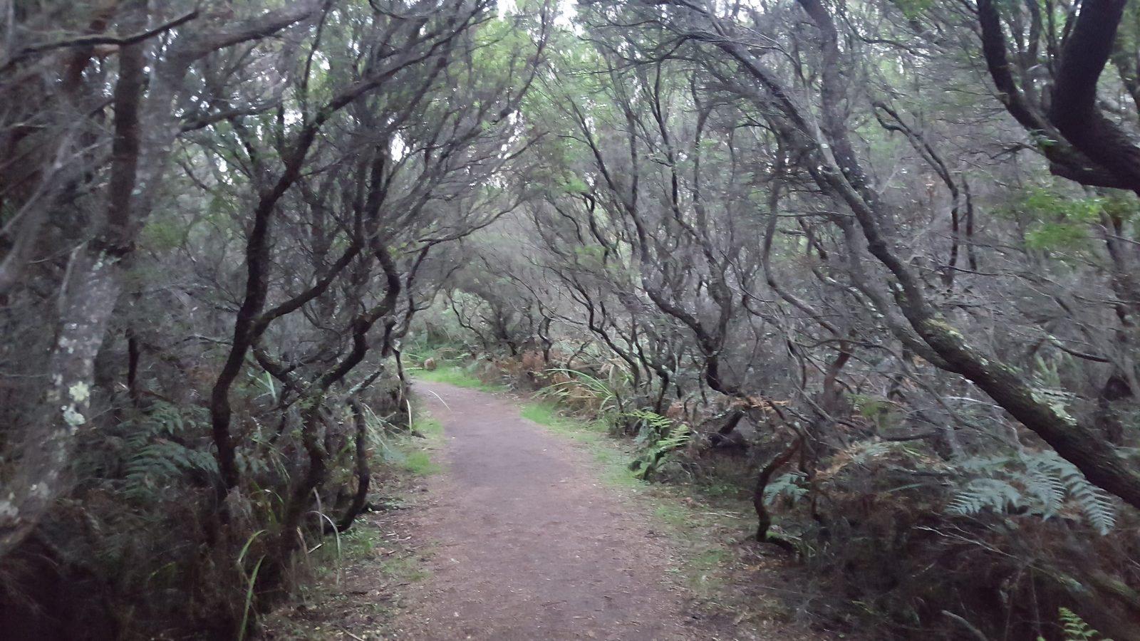 sentier Cape Otway
