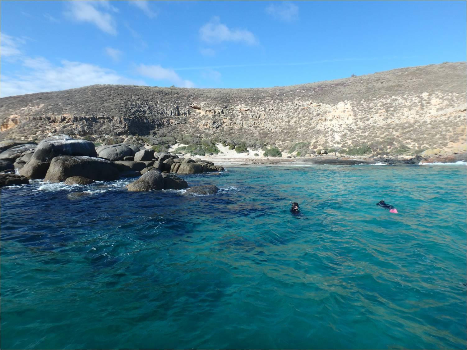 Baie sea lions
