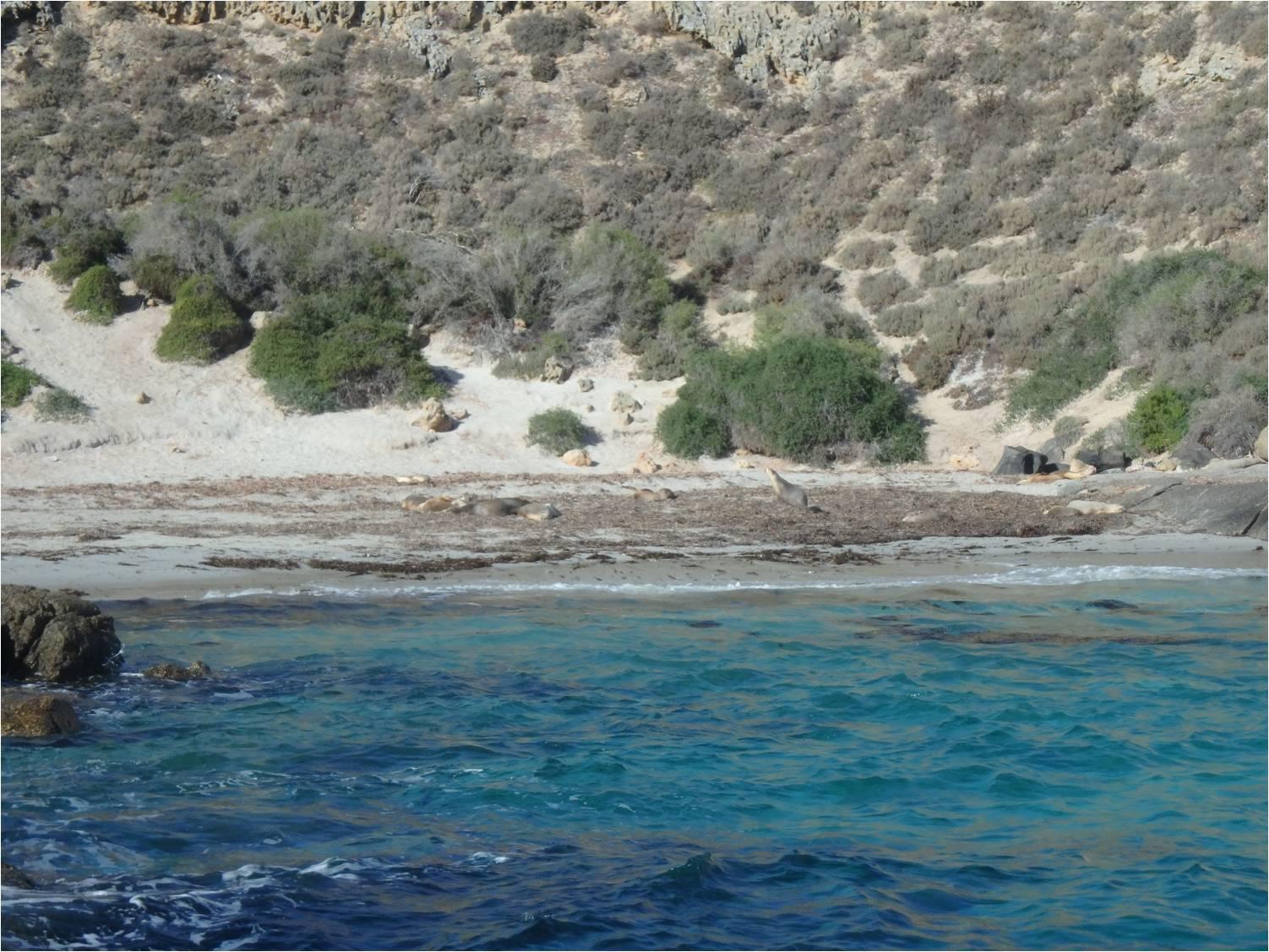 Plage lions de mer
