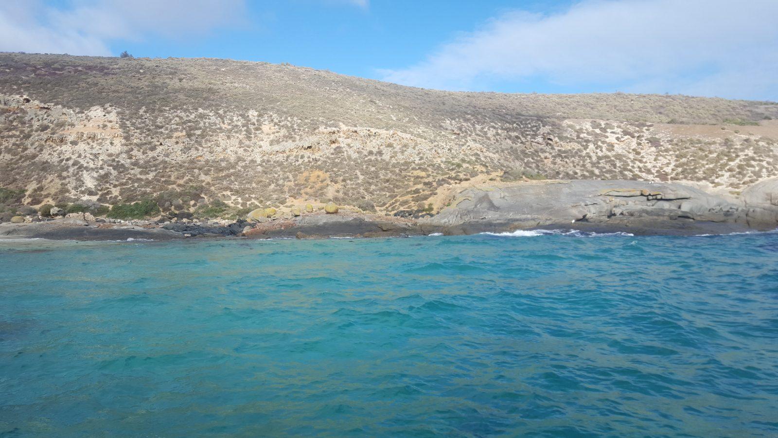 île lion de mer