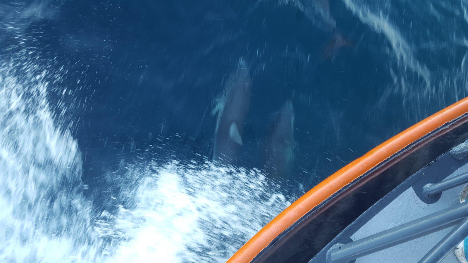 Dauphins jeux bateau