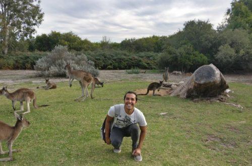 Article : Calme et convivialité au Yanchep National Park