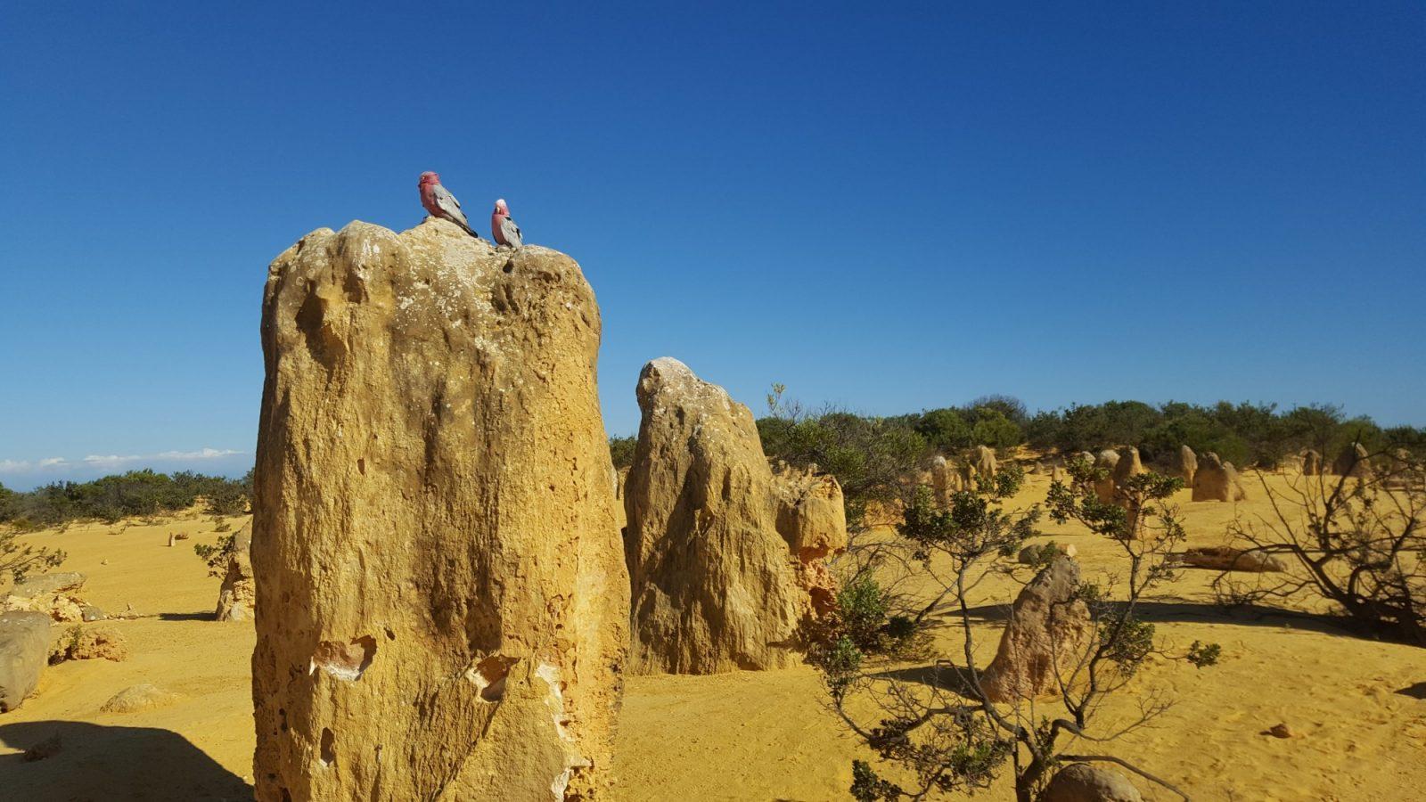 Perruches Pinnacles
