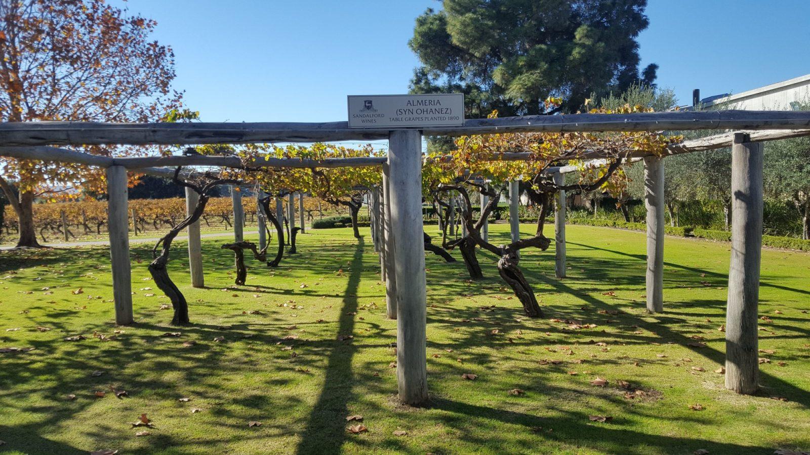 Sandalford Wines vigne