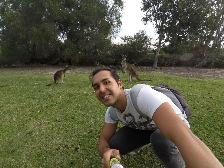 Selfie kangourous