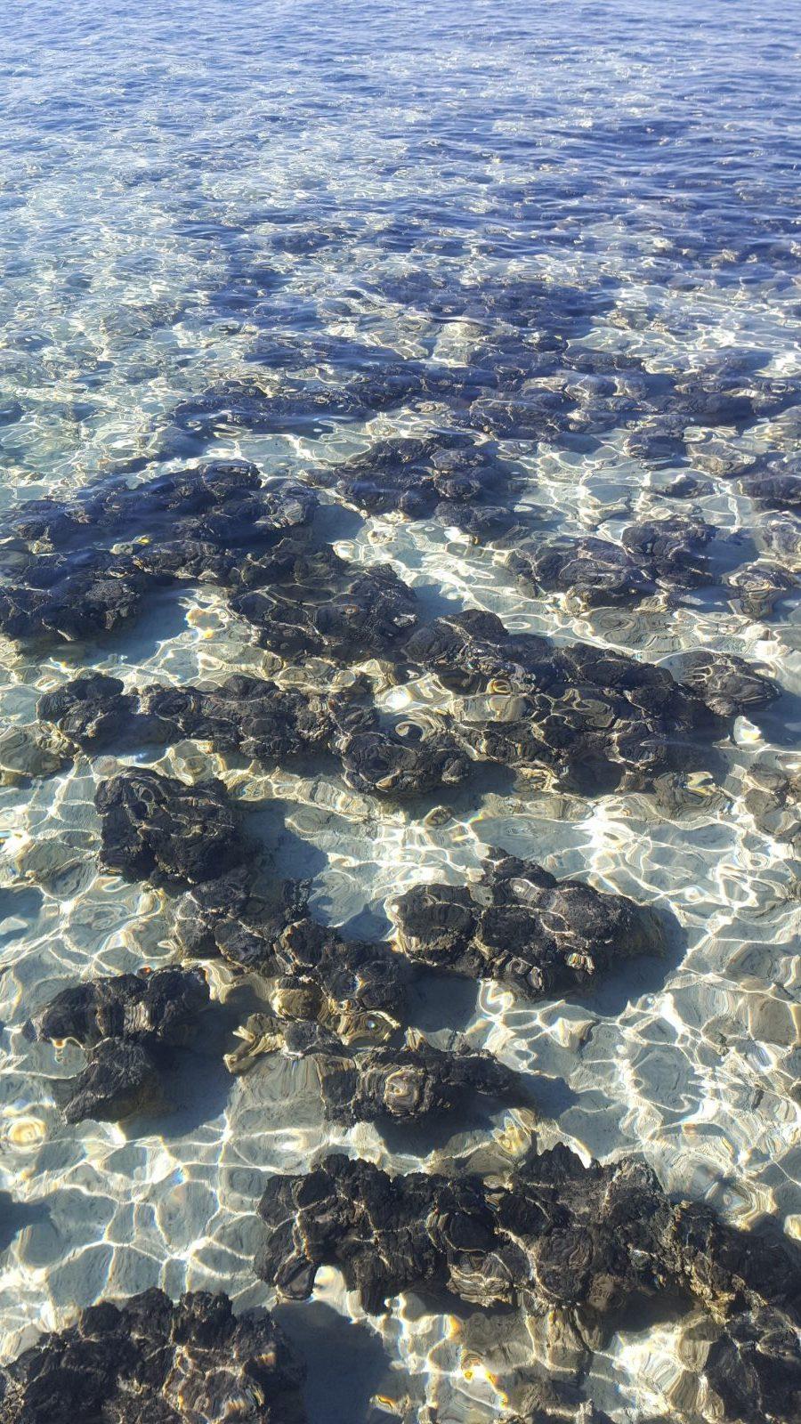 Stromatolites Hamelin Pool