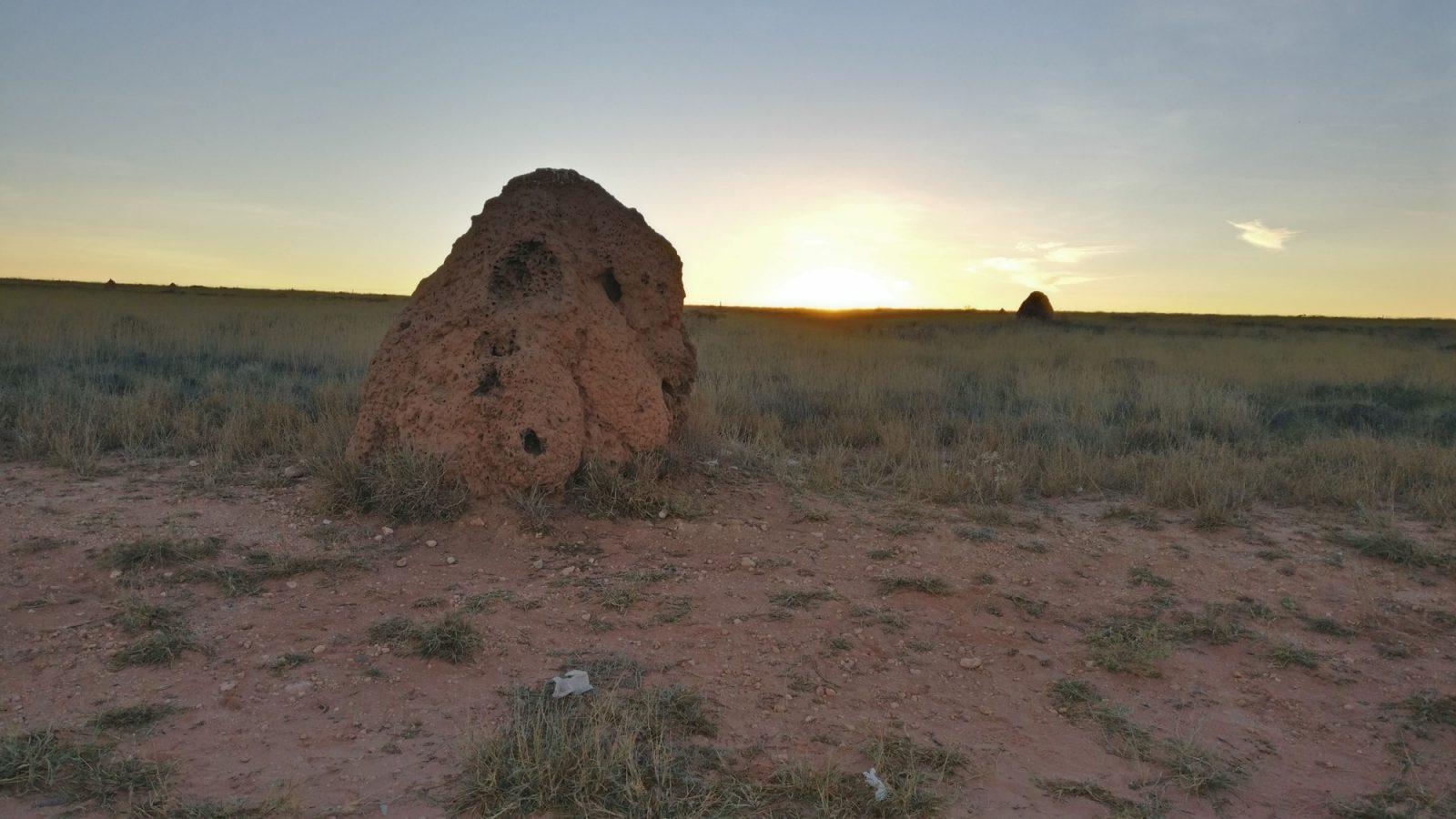 Termitière ouest australien