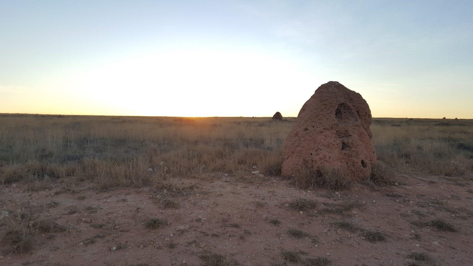 Termitières désert