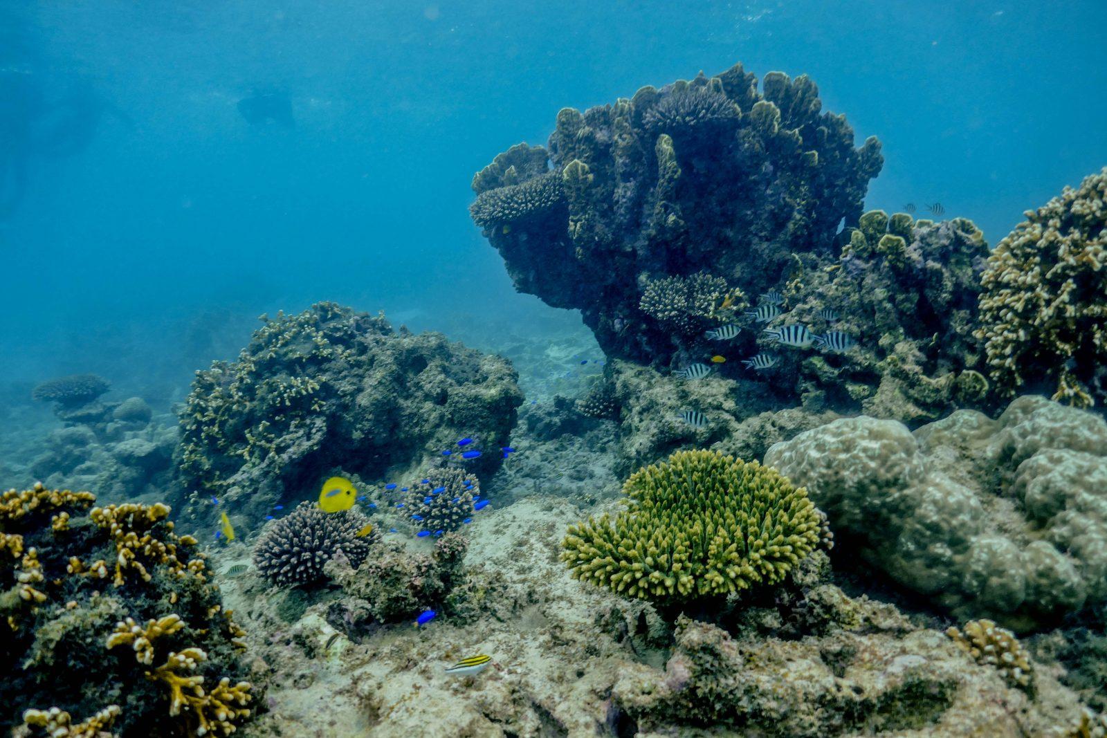 Corail Ningaloo Reef