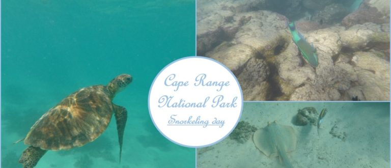 Article : Les fonds marins de Cape Range National Park