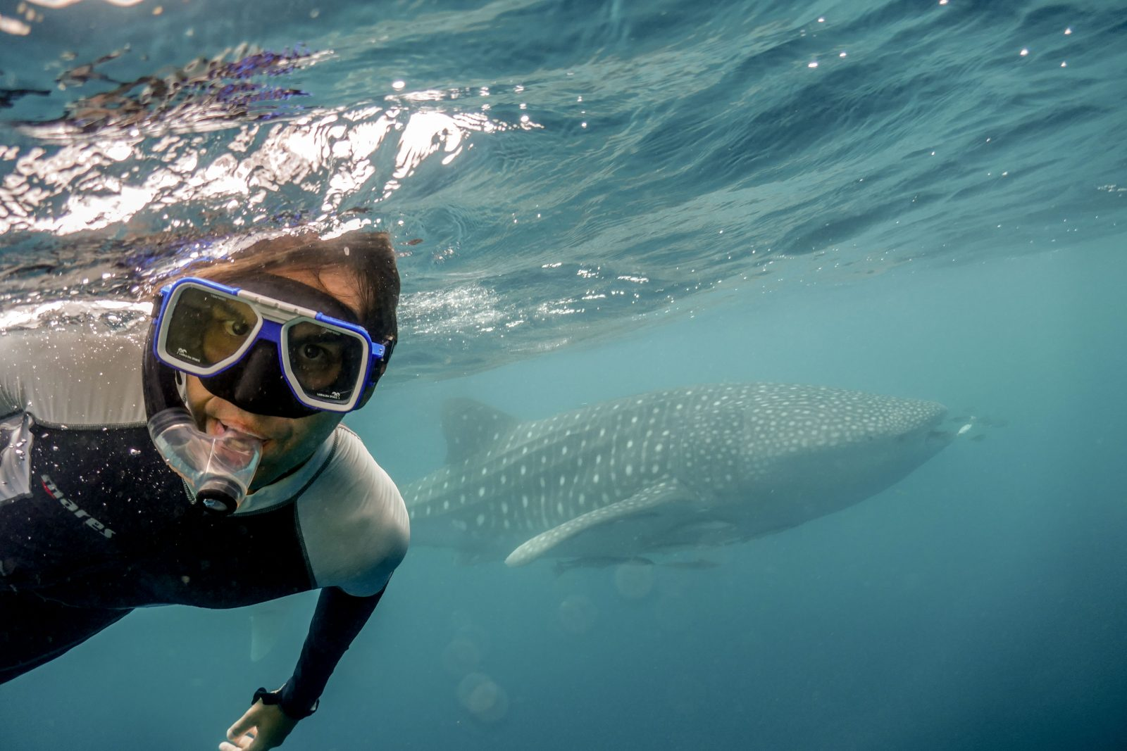 Requin-baleine Ningaloo Reef