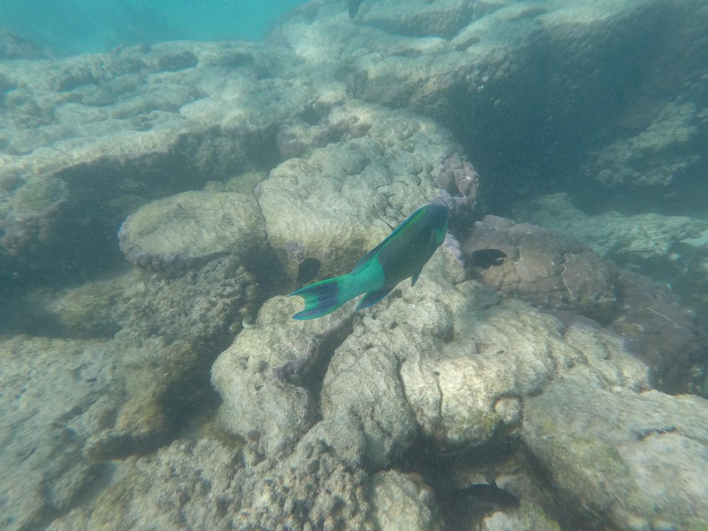 Poisson Osprey Bay